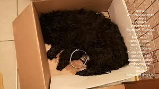 Помогите найти того кто это сделал с собакой Новосибирск 2 ноября 2018