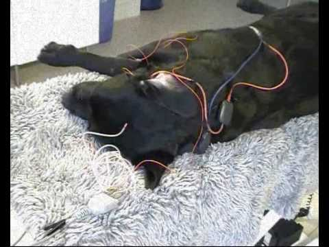 h rsel test p hund och katt baer test brainstem. Black Bedroom Furniture Sets. Home Design Ideas