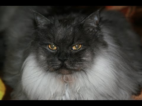 Как лечить мочекаменную у кота