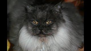 Мочекаменная болезнь у  котов.  Как мы вылечили своего кота.