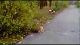 Английский кокер-спаниель Рич!(Кому понравилось данное видео ставьте лайк!, 2013-11-10T12:43:32.000Z)
