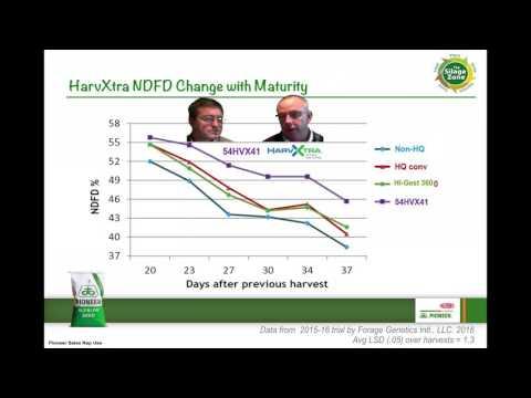 Pioneer Quality Alfalfa