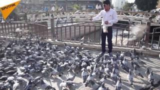 بالفيديو... الحمام الدمشقي رسول سلام الشام إلى العالم