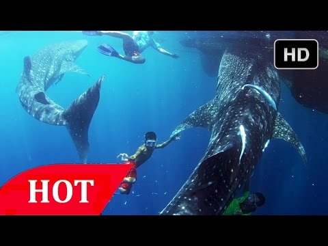 South Pacific Ocean Animals National Geographic HD