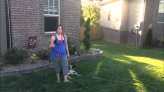 Thresholds - The Calm K9 Dog Training