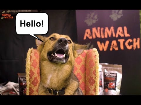 TALKING DOGS! ...DOGGY CHAT SHOW LIVE.
