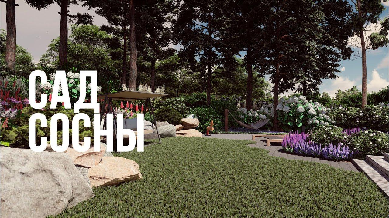 САД СОСНЫ (сад, ландшафтный дизайн, ландшафтный дизайн участка)