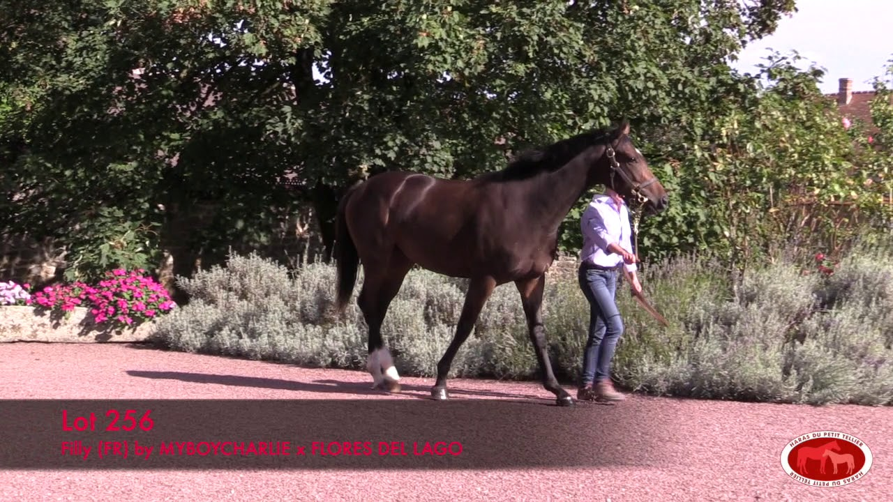 arqana octobre 2019 lot 256