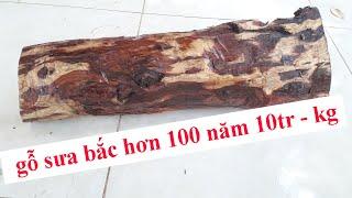 Gambar cover khúc gỗ sưa bắc trên 100 năm 10tr - 1kg | mua bán gỗ sưa cây sưa