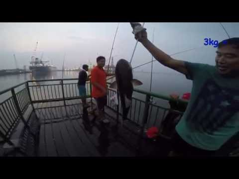 HOOKED ON A 4 KG FISH AT SEMBAWANG PARK (SINGAPORE OFF SHORE FISHING)