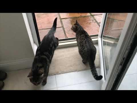 CATS in Slo-mo! (jumping, Walking, & Running) Slo-mo Sunday #17!