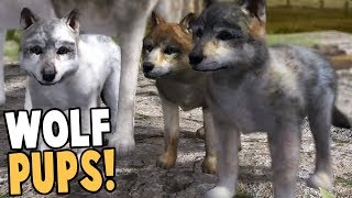 RAISING WOLF PUPS! BEST WOLF SIMULATOR GAME EVER! - Wolf Quest Gameplay