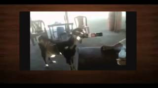 Самые смешные ролики про животных 4