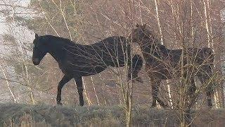 Te konie mają charakterek Zwierzęta domowe / These horses are character Animals