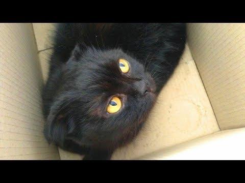 Вопрос: Почему кошки любят когда им чешут под мордочкой?