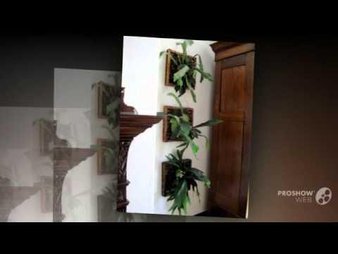 Platycerium - garden plants