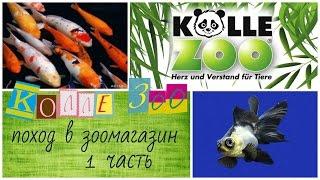 видео Аквариумистика.ру. Аквариумные рыбки. Барбус филаментозус.
