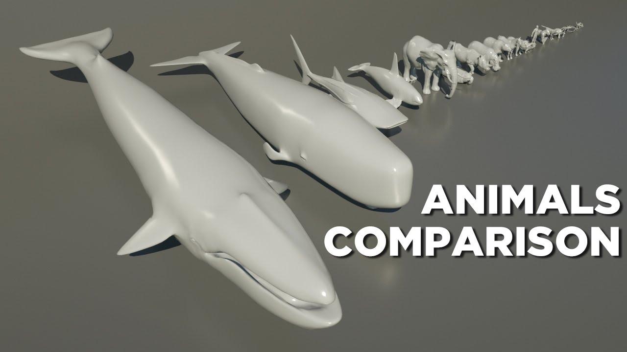 Animals size comparison - YouTube Water Bear Size Comparison