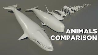 Animals size comparison thumbnail