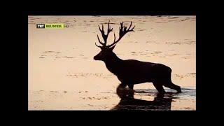 Tuna: Avrupa'nın Amazonu (TRT Belgesel)