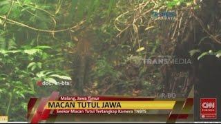 Video Penampakan Seekor Macan Tutul Berburu Mangsa download MP3, 3GP, MP4, WEBM, AVI, FLV November 2017