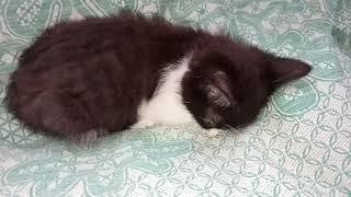 Котики(1)