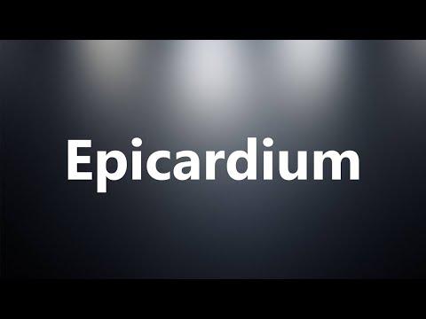 Epicardium - Medical Definition and Pronunciation