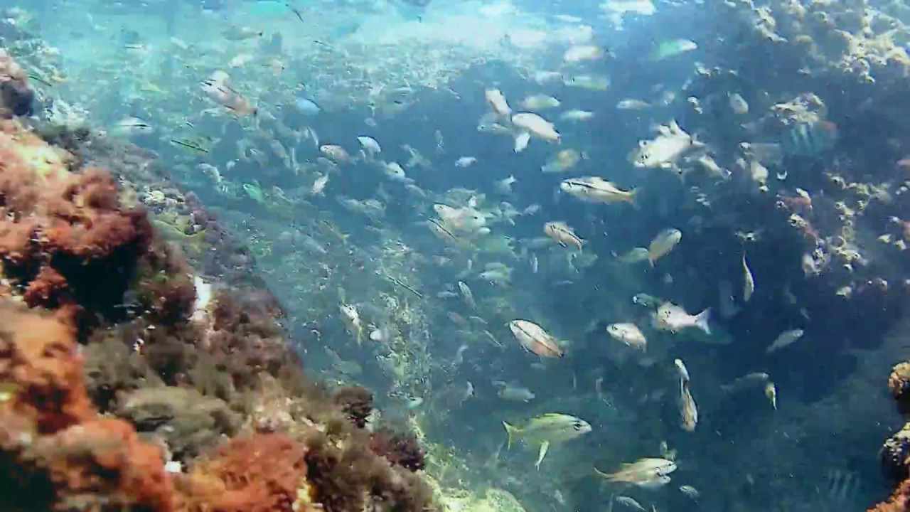 West Palm Beach Beaches >> Snorkeling in South Beach - Miami Beach - July 2017 - YouTube
