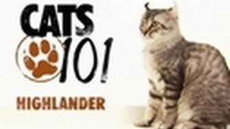 highlander  cats 101