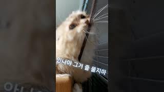 따로따로 안나♡코코