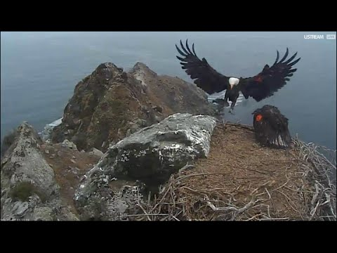 West End Catalina Islands ~ Delivery & Rumble on the Nest 6.22.16
