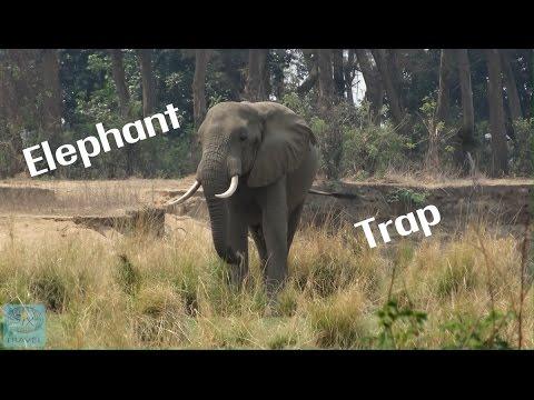 Elephants on the Zambezi became dangerous