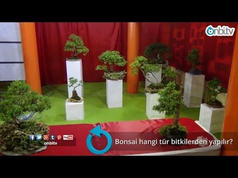 Bonsai hangi tür bitkilerden yapılır?