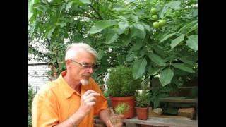 видео Как вырастить розмарин в домашних условиях