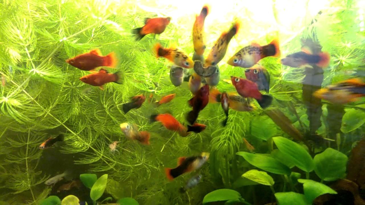 Корм для рыб с витаминами своими руками! [#Аквариумные рыбки .