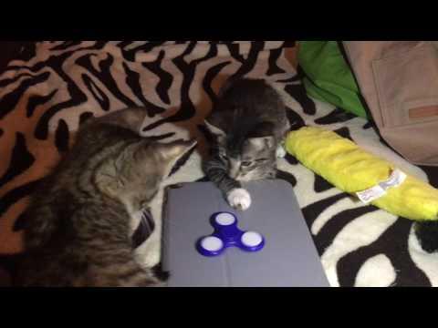 Baby Foster Kittens Love Fidget Spinners too!