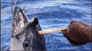 Ngư dân tốt bụng nhổ 'dằm khổng lồ' cho con cá rồi phóng sinh, sau đó anh rất hối hận