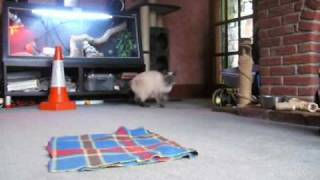Go to Mat training with Cats