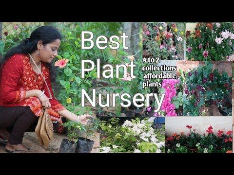 Nursery Plants In Tamil/CHEAPEST PLANT NURSERY In Tamil /மாடித்தோட்டம்