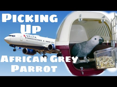 Picking Up Our African Grey Parrot on Myhouse TV