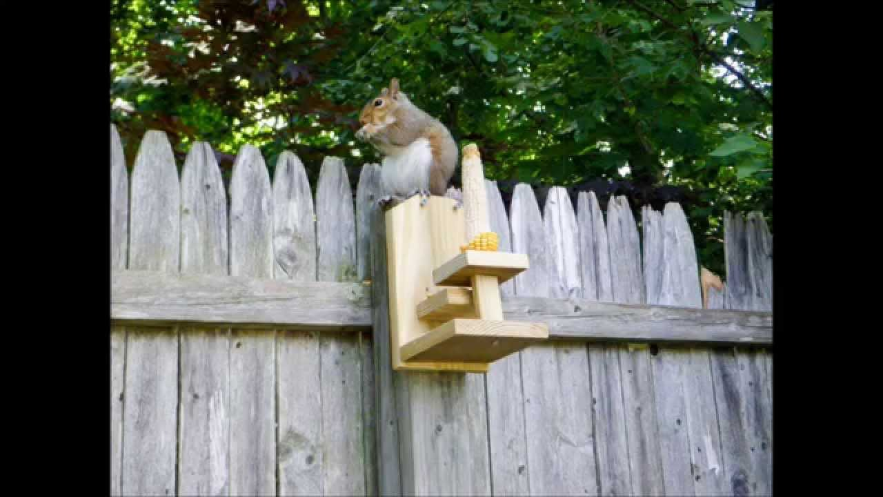 Homemade Squirrel Feeder - YouTube