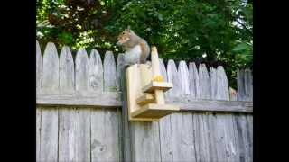 Homemade Squirrel Feeder