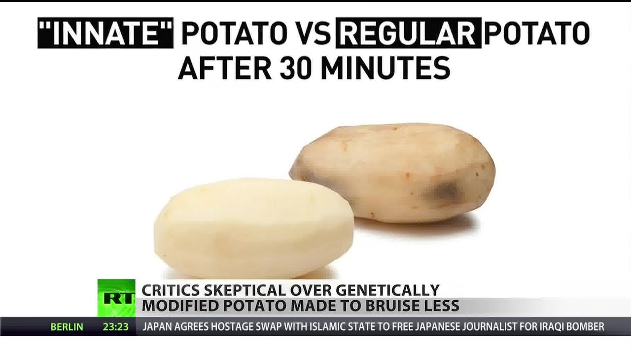 So how do you want your gmo potato cancerous or cancer free youtube - What to do with potatoes ...