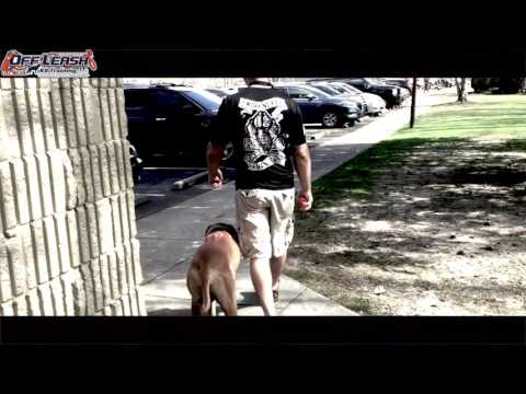 Off Leash Heeling a Rhodesian Ridgeback | Best Georgia Dog Training