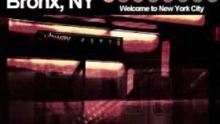 THE SHARK-NYC