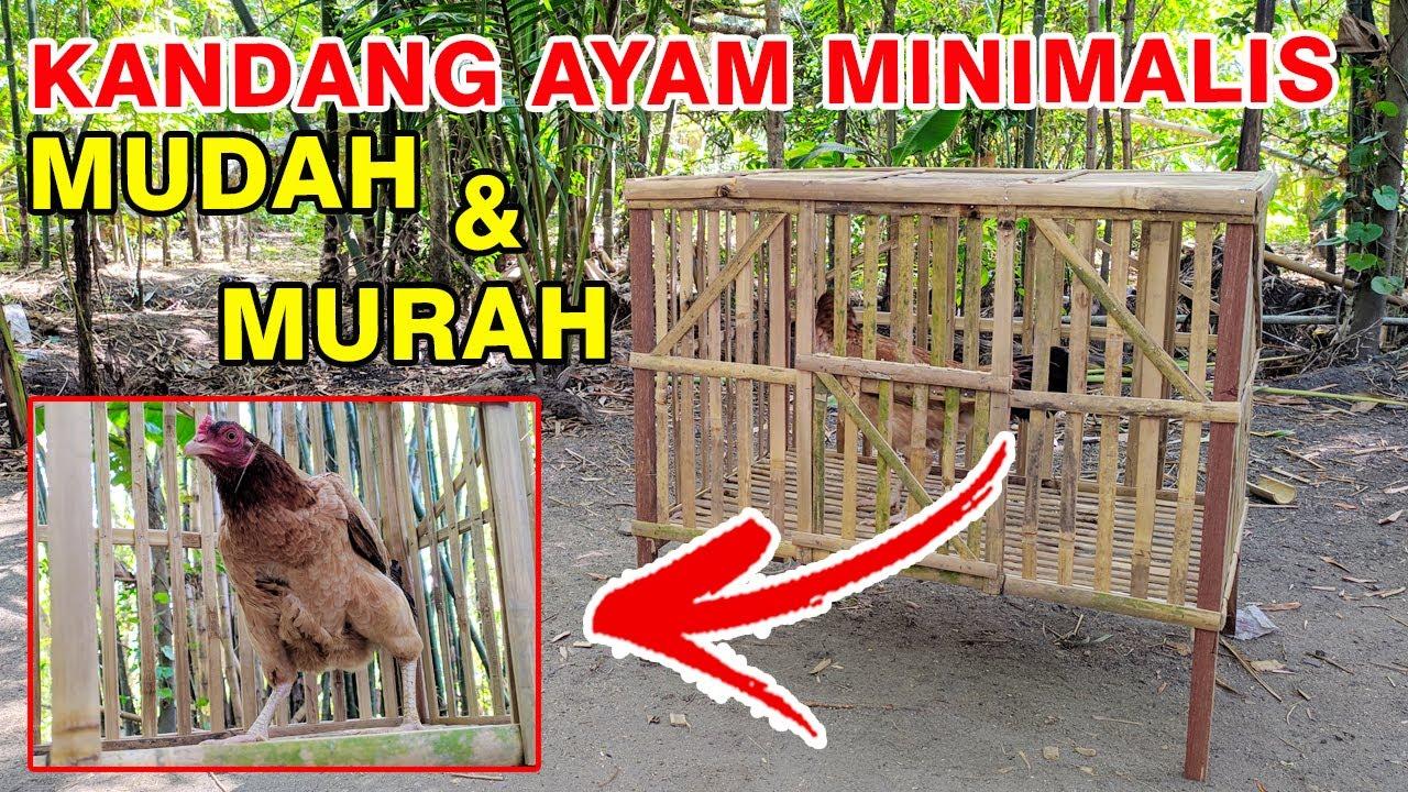 CARA MEMBUAT KANDANG AYAM MINIMALIS MURAH - YouTube