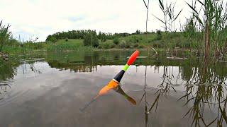 Рыбалка на утренней зорьке на поплавок Клёв карася на маховую удочку