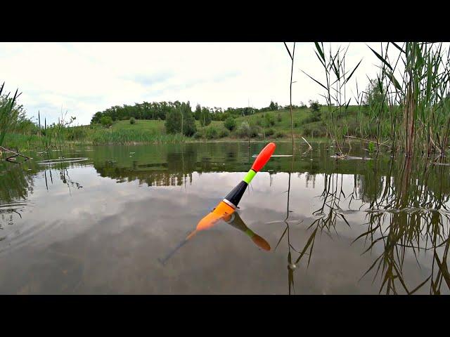 Рыбалка на утренней зорьке на поплавок. Клёв карася на маховую удочку.