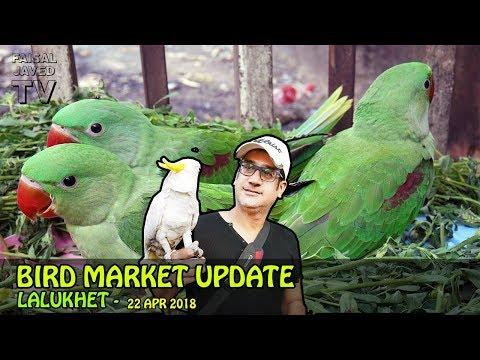 Lalukhet Birds Market | Weekly Update | Baby Parrot | Exotic Birds for Sale in Karachi | URDU/Hindi