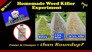 Homemade Weed Killer Experiment P.1